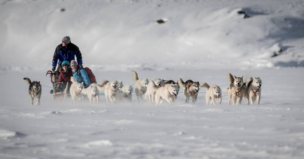 Dog Sledding in Greenland - Best Time