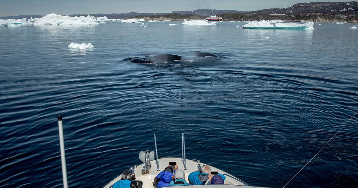 Whale Watching in Greenland - Best Time