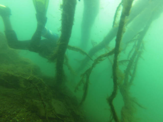 Making a way through some sunken tree branches in the Lake Atitlán