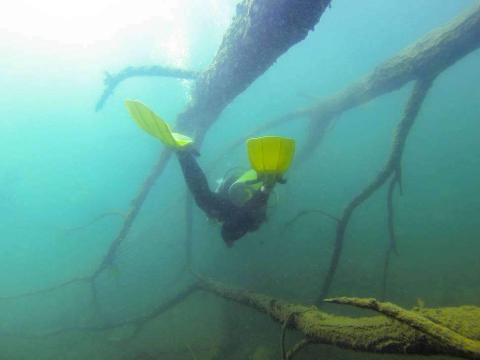 Scuba Diving in Guatemala - Best Time