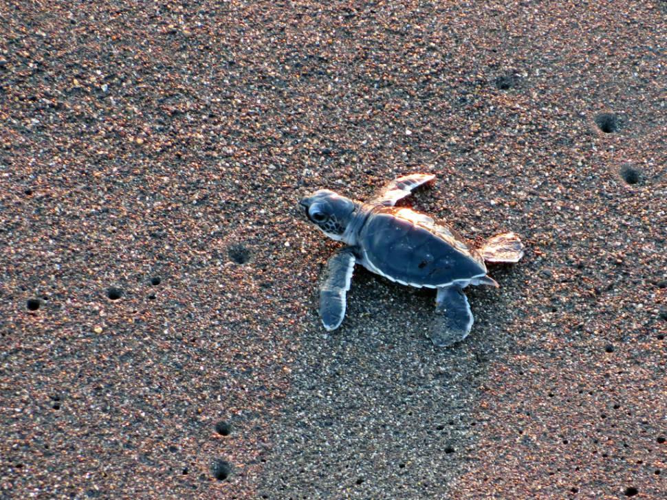 Speedy Turtles in Guatemala - Best Time