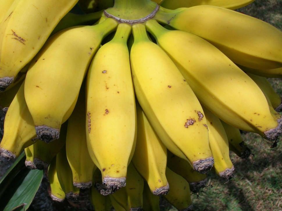 Apple Bananas in Hawaii - Best Season