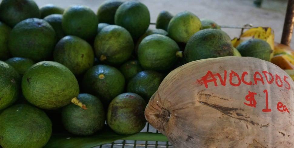 Avocado in Hawaii - Best Time