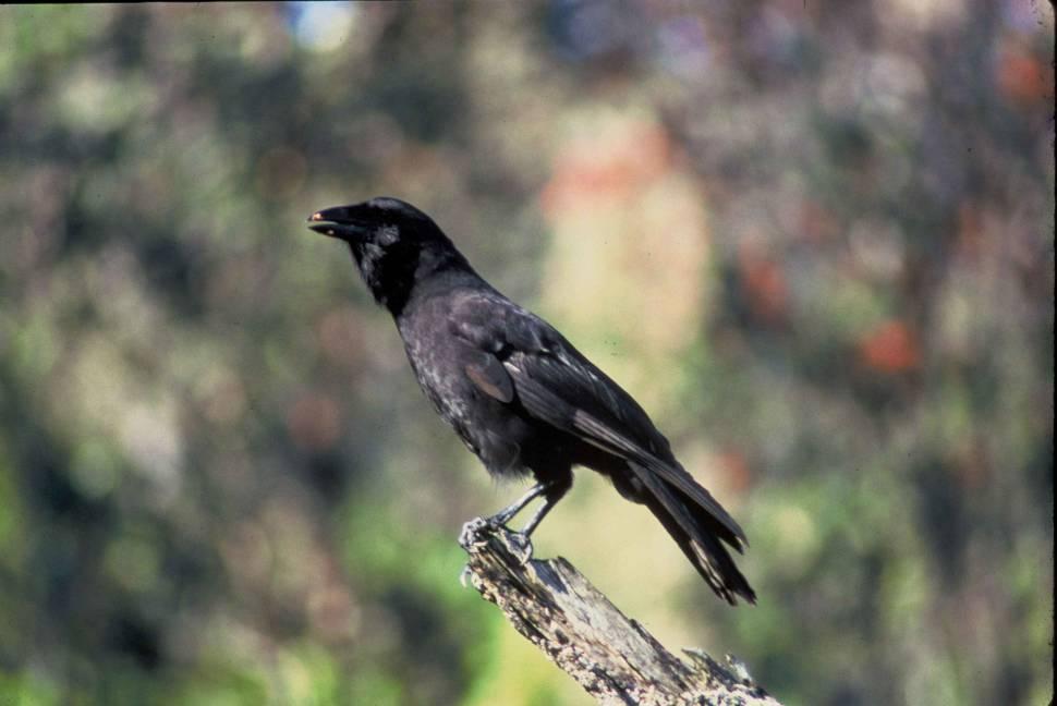 Birdwatching in Hawaii - Best Time