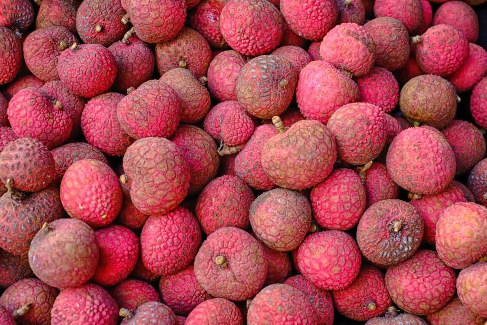 Lychee in Hawaii - Best Time