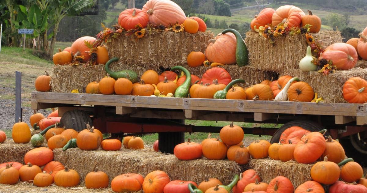 Great Pumpkin Festival in Hawaii - Best Time