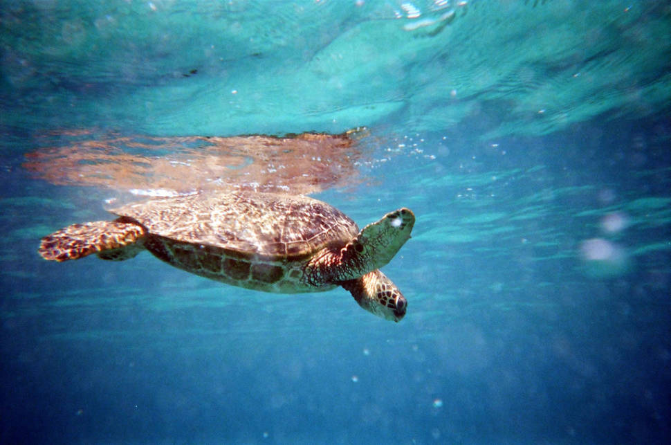 Best time for Turtle Town in Maui in Hawaii