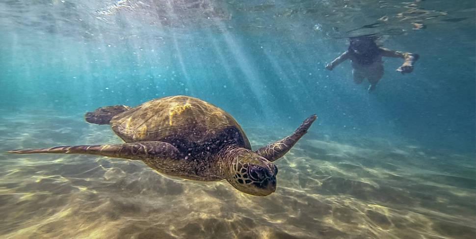 Turtle Town in Maui in Hawaii - Best Season