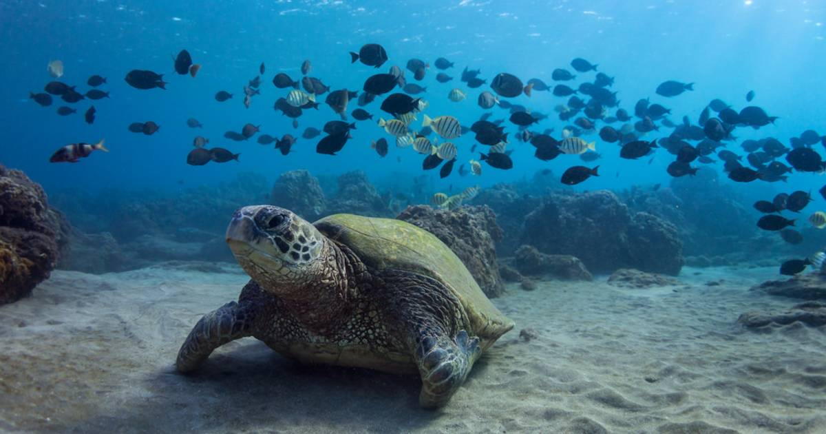 Turtle Town in Maui in Hawaii - Best Time