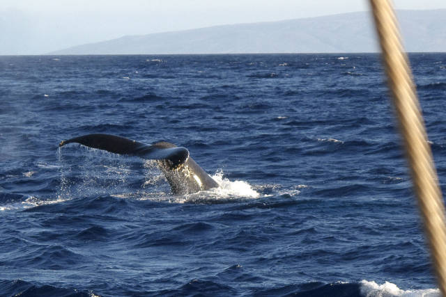 Whale Watching in Hawaii - Best Time