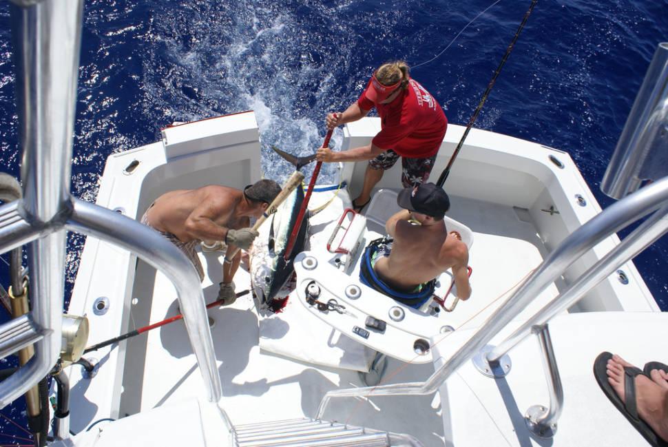 Yellowfin tuna catch off Big Island