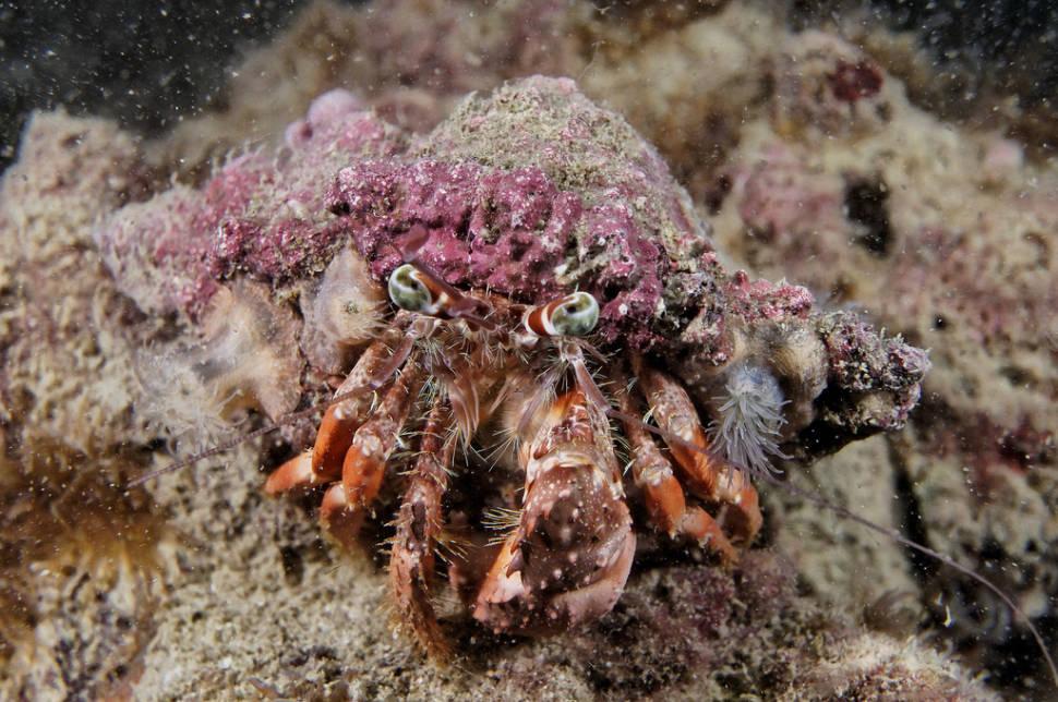 Coral Reef Scuba Diving in Hong Kong - Best Season
