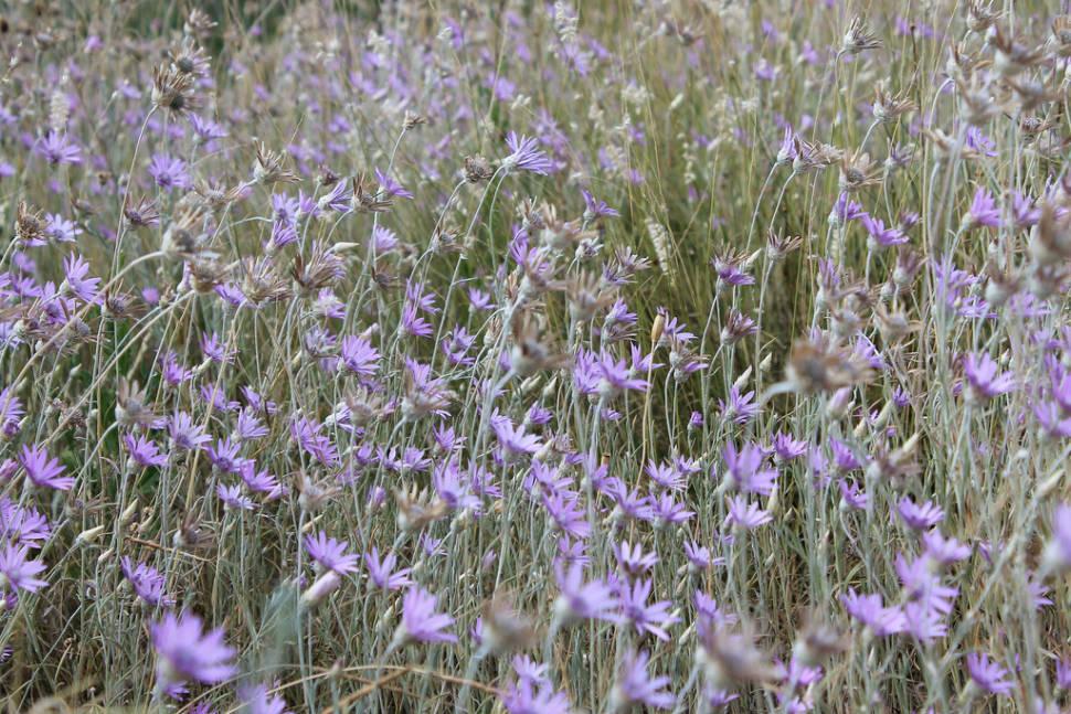 Flora of Sas-hegy in Hungary - Best Season