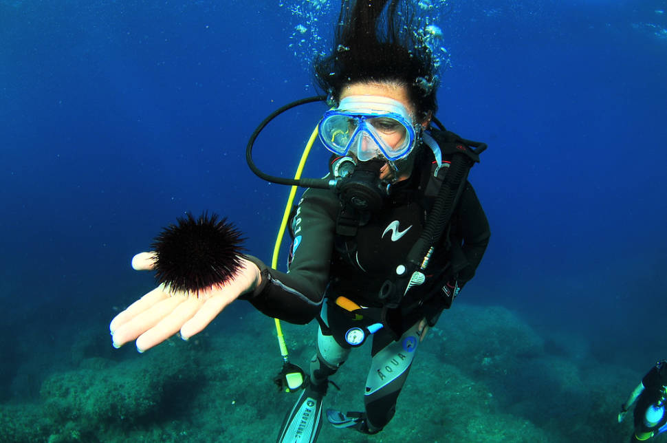 Diving in Ibiza in Ibiza - Best Time