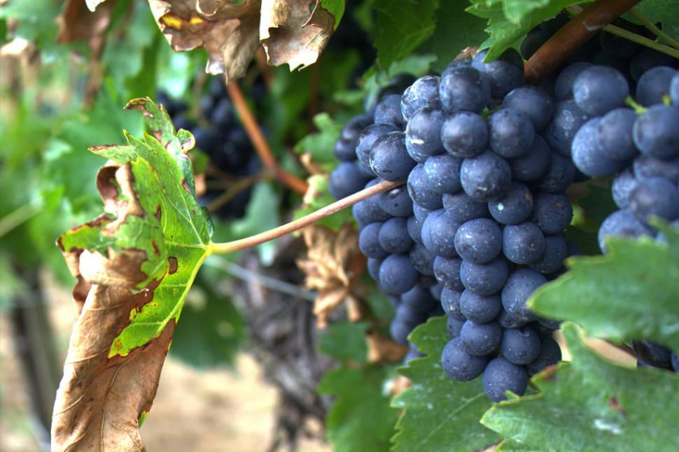 Wine Season and St. Mateu in Ibiza - Best Season