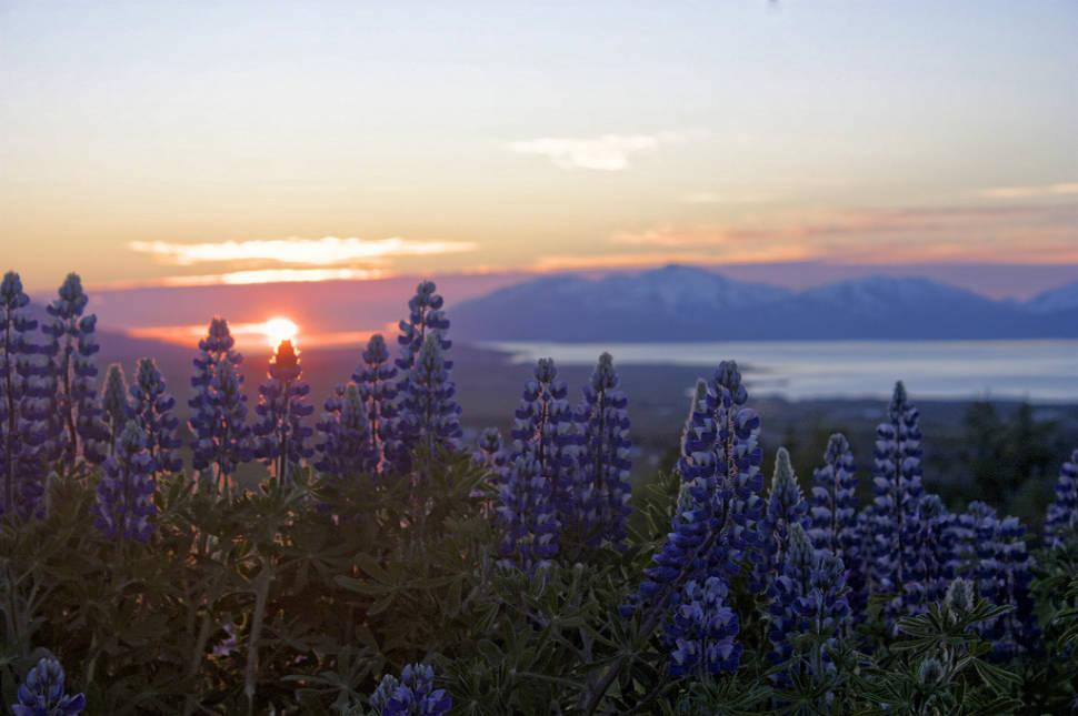 Midnight Sun in Iceland - Best Season