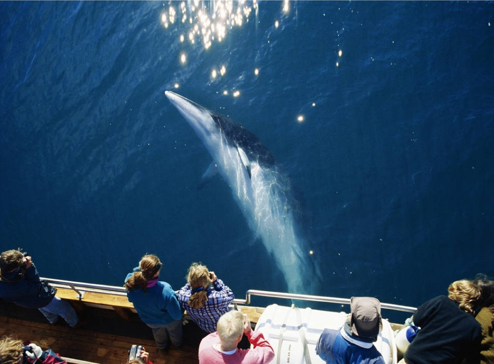 Whale Watching in Iceland - Best Season