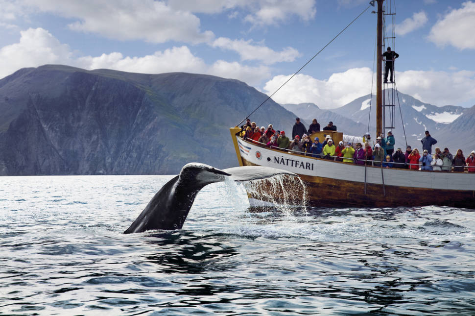 Best time for Whale Watching in Iceland