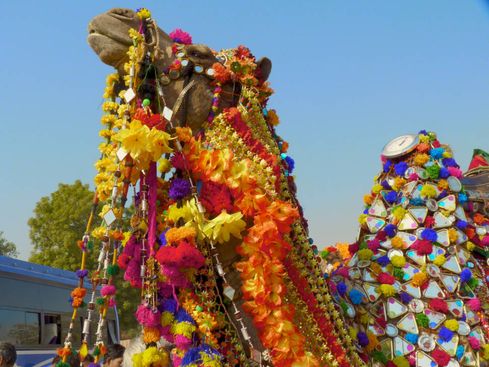 Bikaner Camel Festival in India - Best Season