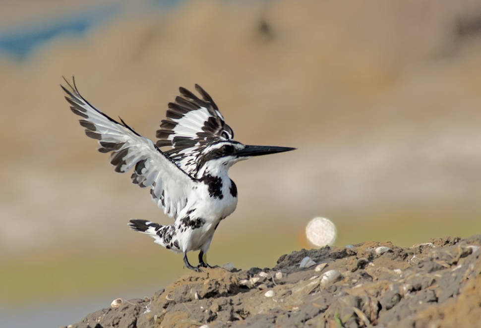 Birdwatching in India - Best Time