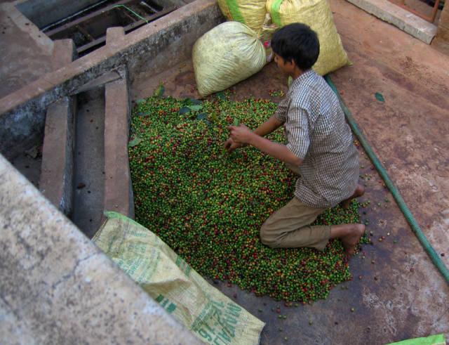 Chikmagalur coffee plantation in Karnataka
