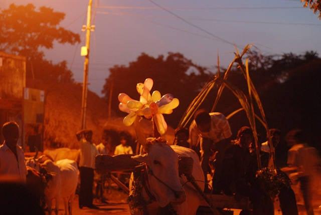 Pongal in India - Best Season