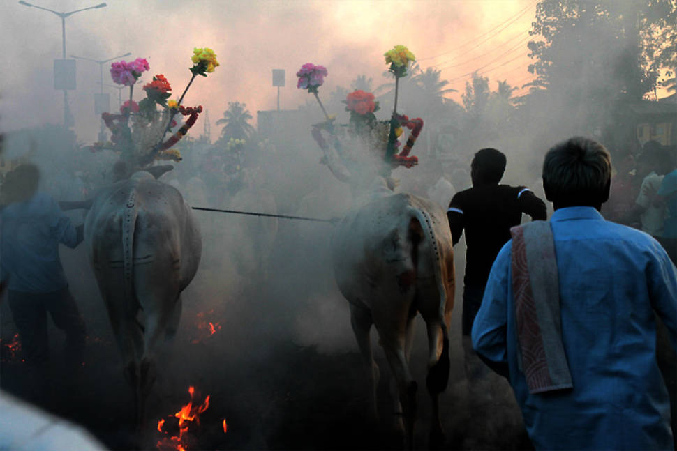 Best time for Pongal in India