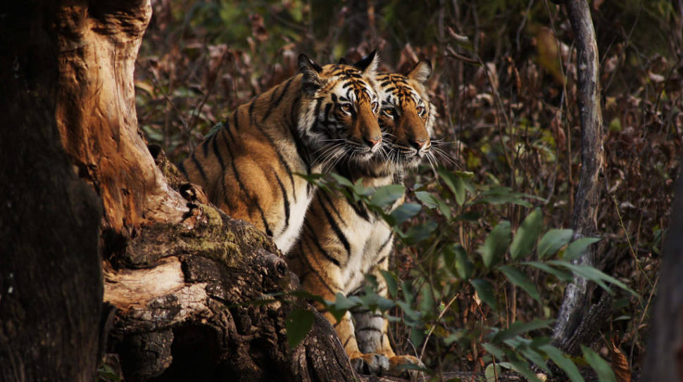Safari in India - Best Time