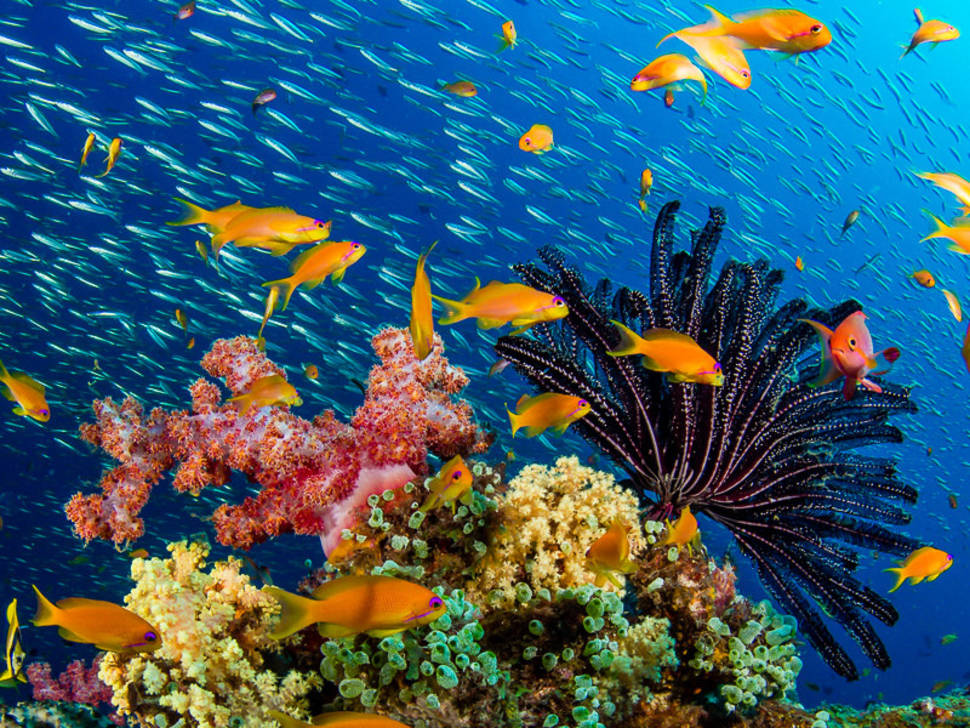 Scuba Diving in India - Best Time
