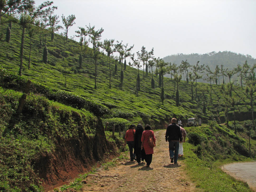 Taking a tour of a tea estate in the Periyar area, Kerala