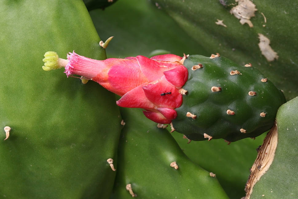 Cactus Flowers Blooming Season in Israel - Best Season