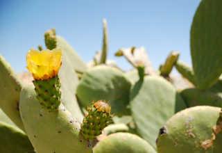 Cactus Flowers Blooming Season