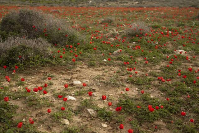 Desert Bloom Season in Israel - Best Time