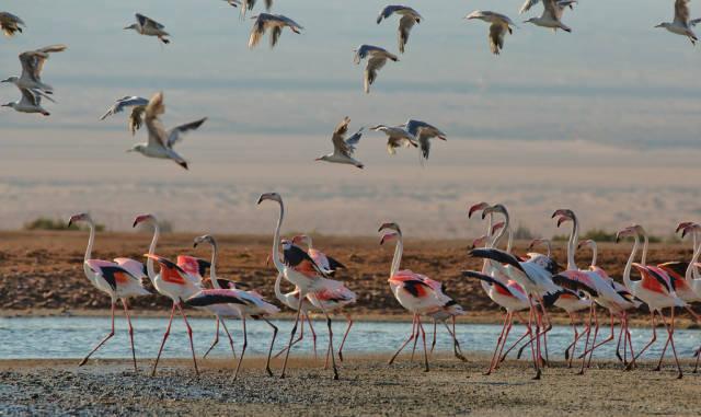 Unique Birdwatching in Israel - Best Time