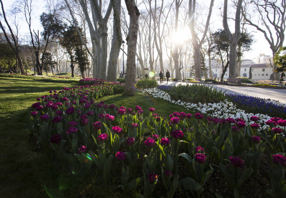 Tulips in Istanbul - Best Time