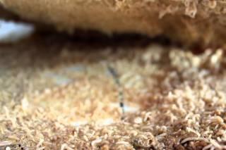 Casu Marzu, Sardinian Maggot Cheese