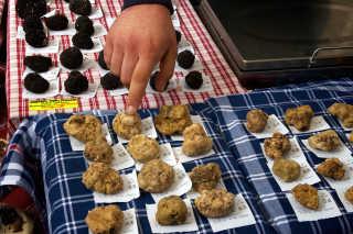 White Truffle Season & Fairs