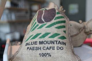 Blue Mountain Coffee Harvest