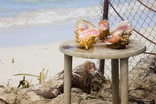 Queen Conch Season