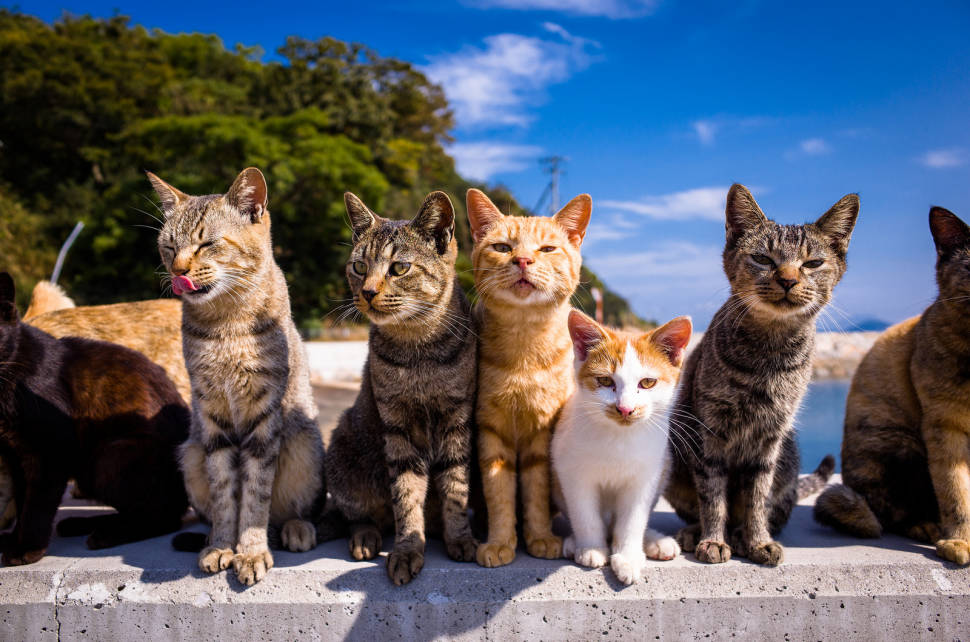 Aoshima (Cat Island) in Japan - Best Time