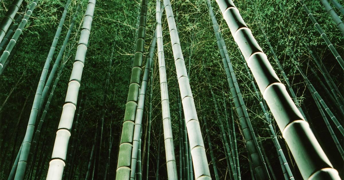 Arashiyama Hanatouro in Japan - Best Time