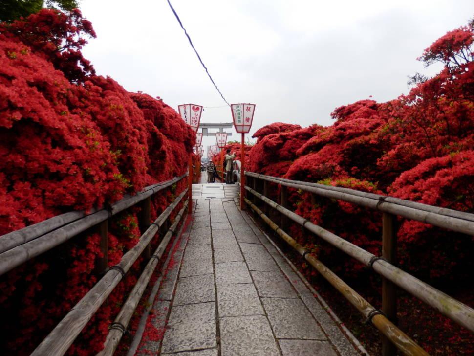 Best time for Azaleas in Japan