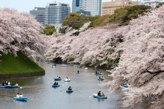 Best time to see Hanami Season in Japan