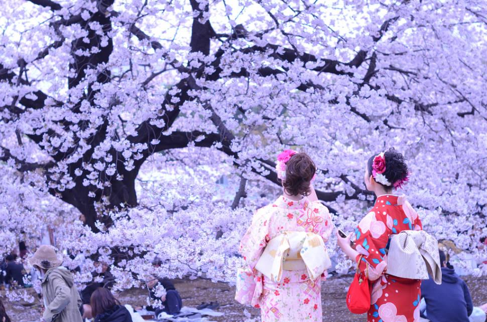 Hanami Season in Japan - Best Time