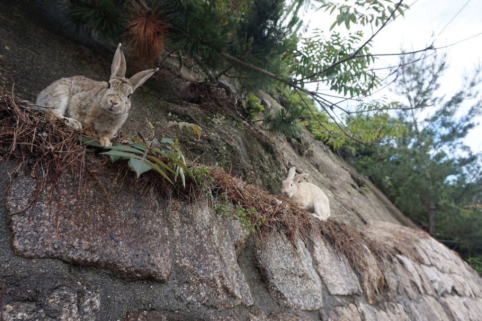 Okunoshima (Rabbit Island) in Japan - Best Season