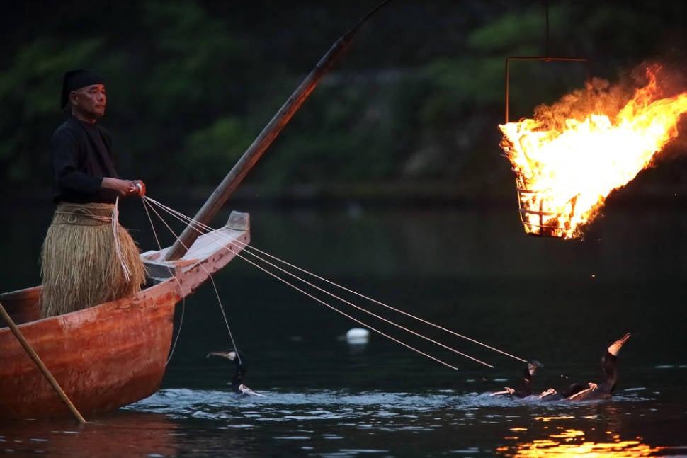 Cormorant Fishing in Japan - Best Season