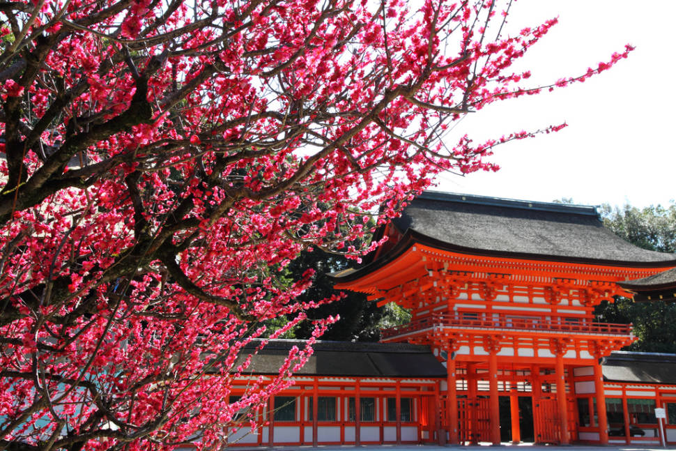 Red Ume Blossoms and Traditional Red in Kyoto