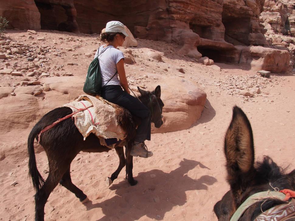 Donkey Ride in Jordan - Best Season