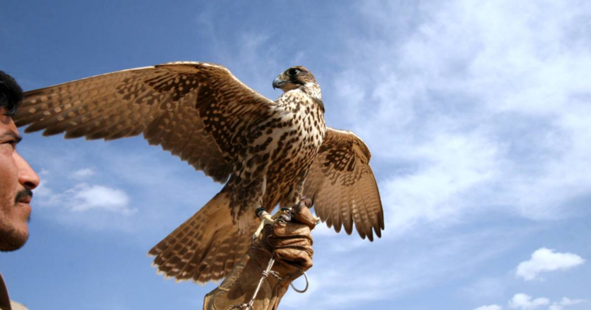 Falconry Experience in Jordan - Best Time