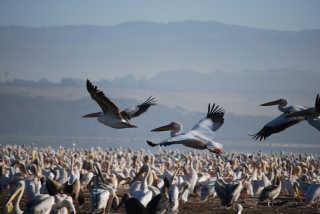 Birding at Great Rift Valley